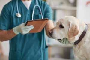 List of best veterinary clinics in Ludhiana